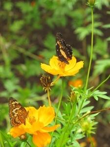 Butterflies at Finca Mystica, Ometepe Island, Nicaragua